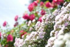 イタリア山庭園-162