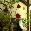 花と器のハーモニー2019-374
