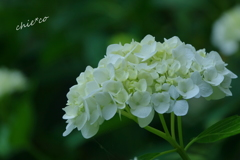 久良岐公園-258