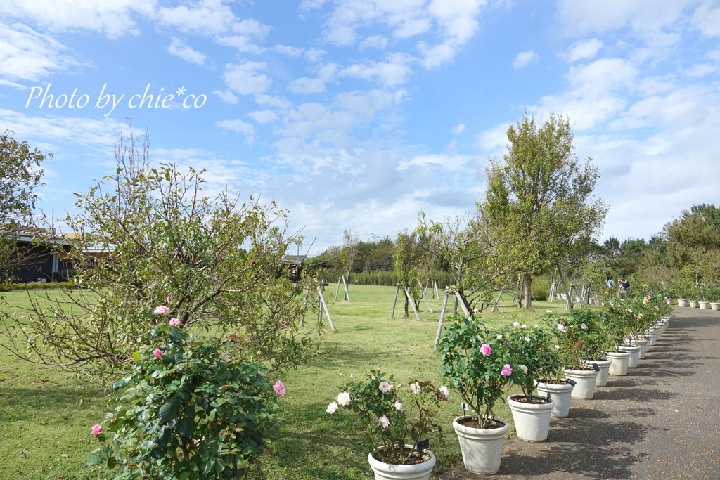 花菜ガーデン-389
