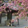 鎌倉-299