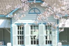 横浜*桜さんぽ-215