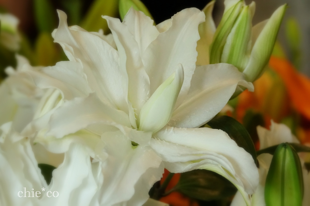 花と器のハーモニー2019-328