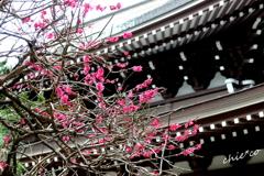 北鎌倉-302