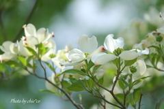 石川町~イタリア山庭園-207
