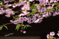 北鎌倉-267
