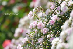イタリア山庭園-161