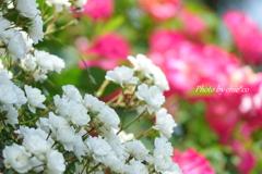 イタリア山庭園-166