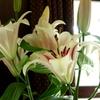 花と器のハーモニー2019-354