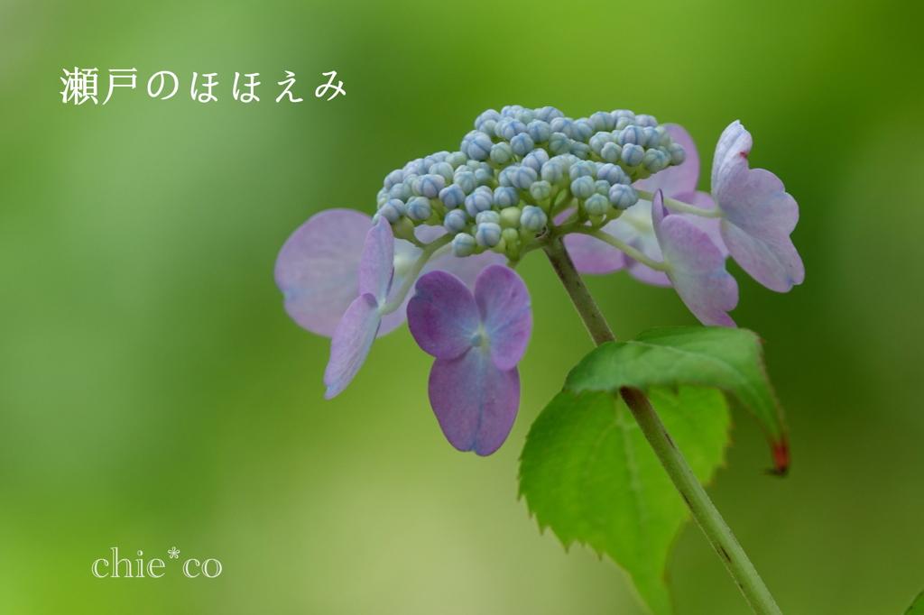 瀬戸神社-249