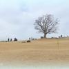 吾妻山公園-222