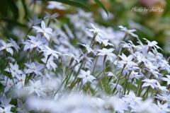 山下公園の花たち-007