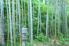 鎌倉-196