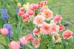 山下公園の花たち-001