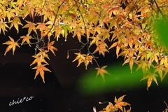 鎌倉瑞泉寺。。-095