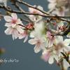 十月桜。。-005