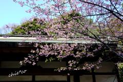 北鎌倉-270