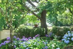イタリア山庭園-173