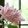 花と器のハーモニー2019-379