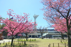 Yokohama-276