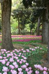 横浜公園-298