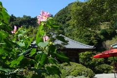 鎌倉-242
