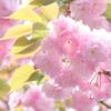 石川町~イタリア山庭園-196