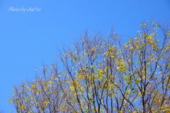 森浅間神社-161
