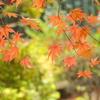岡田美術館庭園-086
