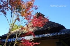一条恵観山荘-111