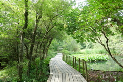 緑の湿原。。3
