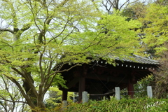 鎌倉-323