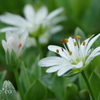箱根湿生花園-251