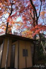 強羅公園-092