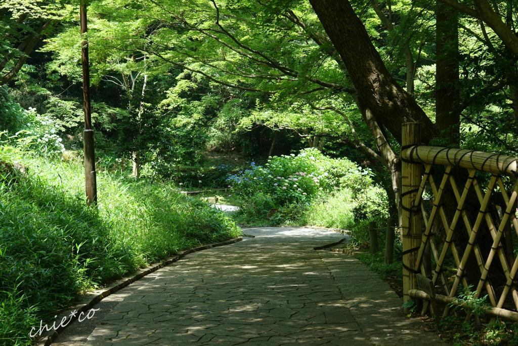 久良岐公園-260