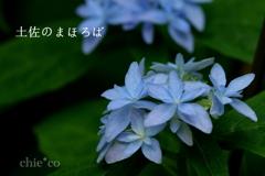 瀬戸神社-289