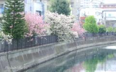 石川町~イタリア山庭園-197