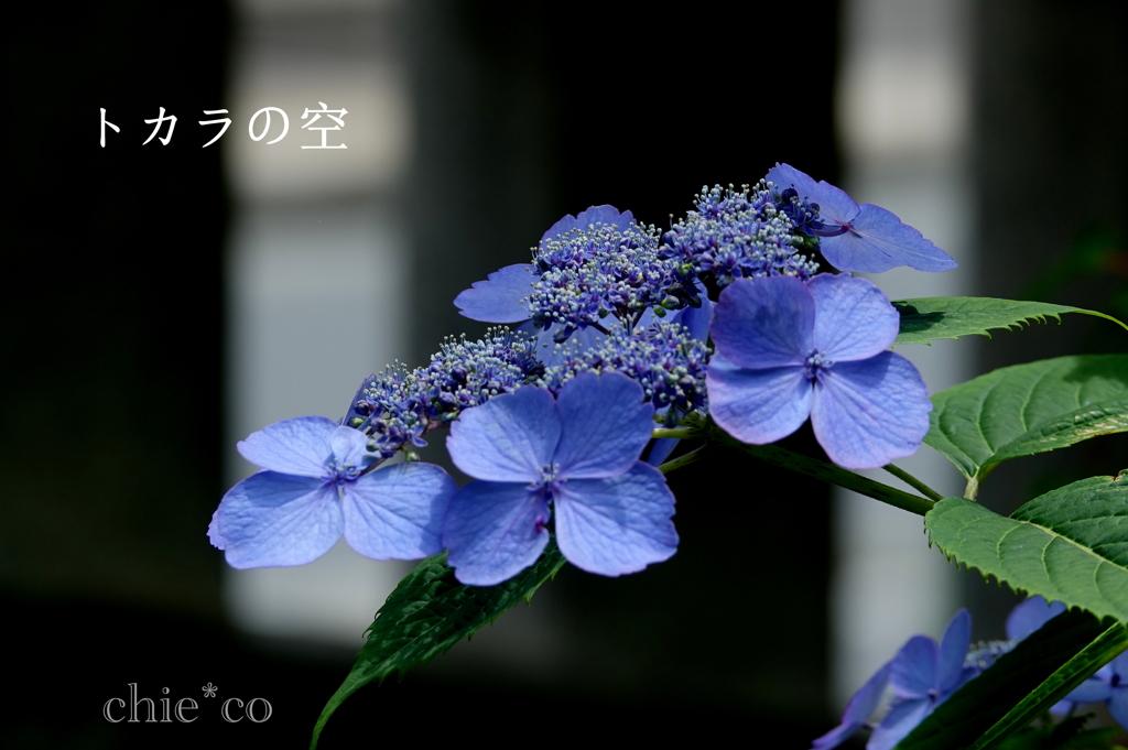 瀬戸神社-278