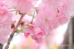 石川町~イタリア山庭園-193