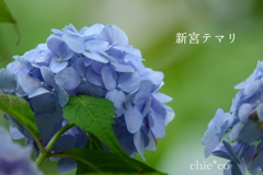 瀬戸神社-282