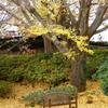 山手イタリア山庭園-229