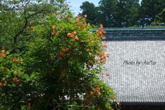 鎌倉-272