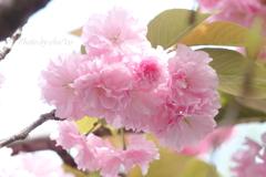 石川町~イタリア山庭園-190