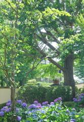イタリア山庭園-178