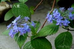 瀬戸神社-284