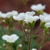 箱根湿生花園-248