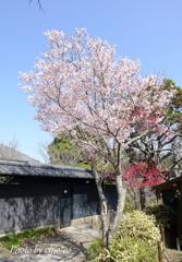北鎌倉-250