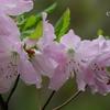 箱根湿生花園-260