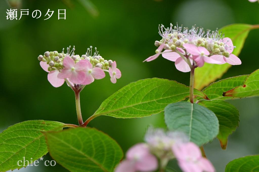 瀬戸神社-247