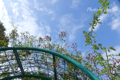 花菜ガーデン-384